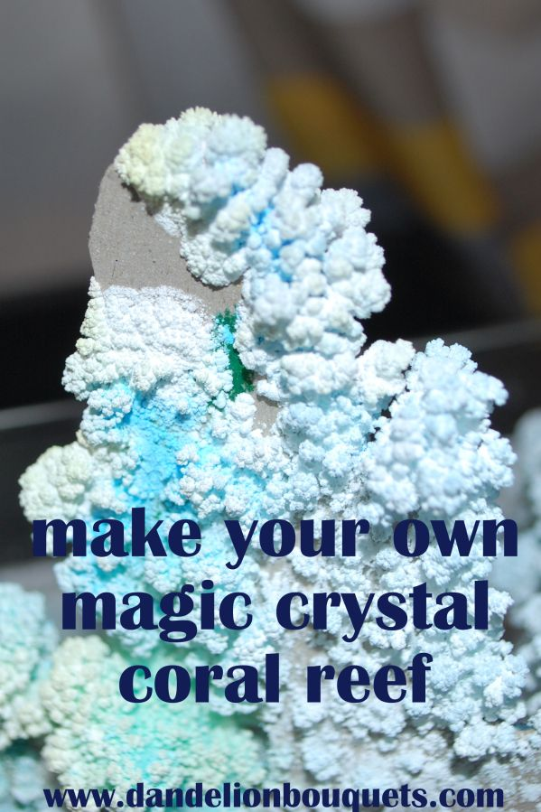 just like those magic crystal trees I had growing up! the how to in making a magic crystal coral reef.