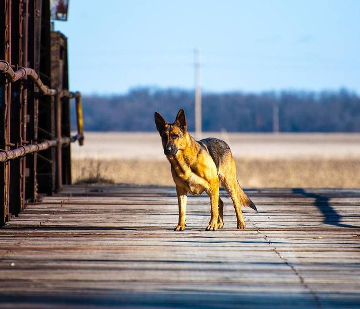 My boy Emmett and me playing on a local river bridge....love ya buddy!  My buddy my pal my friend  #brownfootbear #brownfootbearphotography #photography #gunnarwilliamsphotography #gunnwilliams #dog #dogs #dogsofinstagram #dogoftheday #woof #mustlovedogs #withdog #love #boyandhisdog #KansasCity #kc #Kansas #ks #kansasphotos #summer #noplacelikeks #travel #art #exploring #sightseeing #outdoordog
