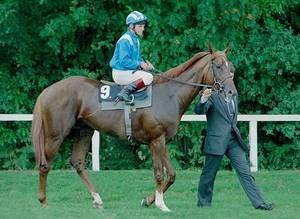 Nashwan (USA) 1986 (Blushing Groom-Height of Fashion), winner of the 1989 Epsom Derby. Ancestral Sire of Atlantic Jewel, through her dam, Regard.