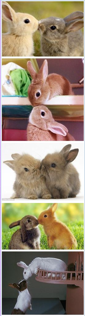 #precious bunny kisses