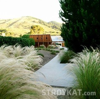 Что посадить на прибрежном участке для красоты – декоративные травы