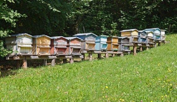 Les 25 meilleures id es de la cat gorie piqure d abeille en exclusivit sur pinterest piqure - Soulager une piqure de guepe ...