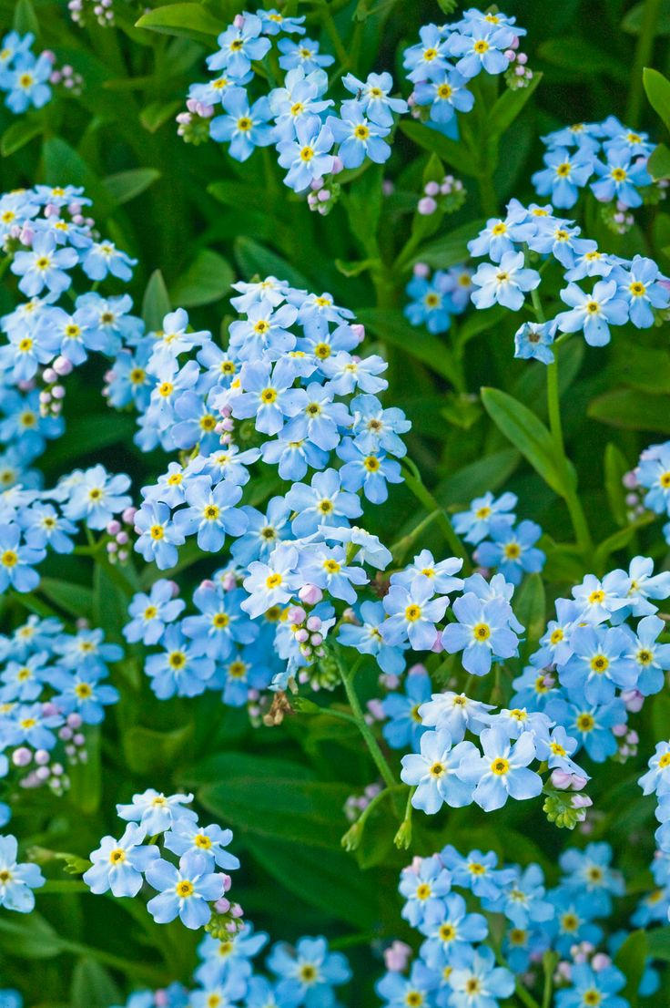 How to plant a flower garden - 50 Flowers You Should Have In Your Garden