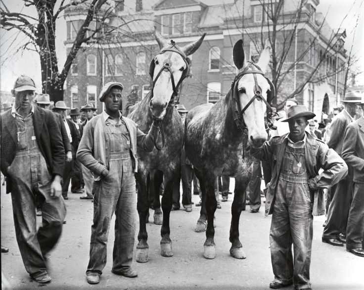 Mule Day, 1930's, Paris, Tennessee