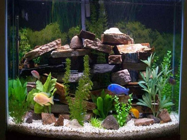 17 best images about freshwater aquariums on pinterest for Aquarium decoration ideas freshwater