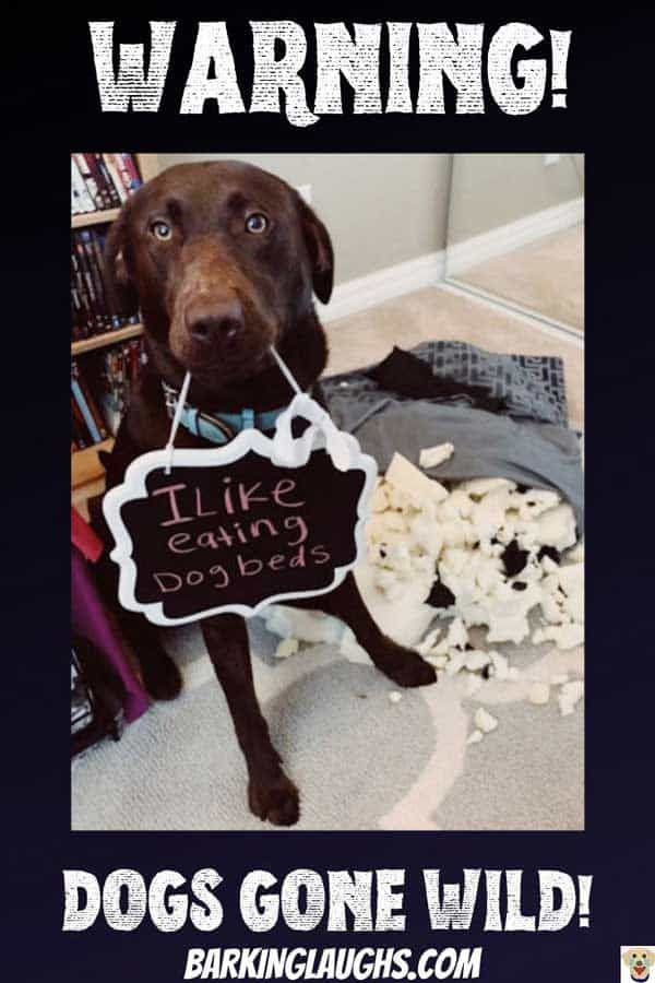 Dog Shaming New Pics 22 Hysterically Shamed Dogs In Trouble Time