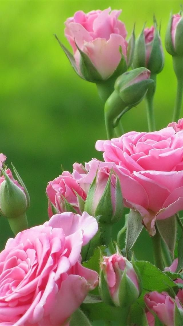 """""""Love opens the hearts of flowers."""" - from """"Love"""" in the Gardens of the Heart series by Summit University Press"""