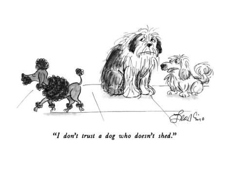 """""""I don't trust a dog who doesn't shed."""" New Yorker"""