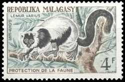 Le fameux lémurien varecia.