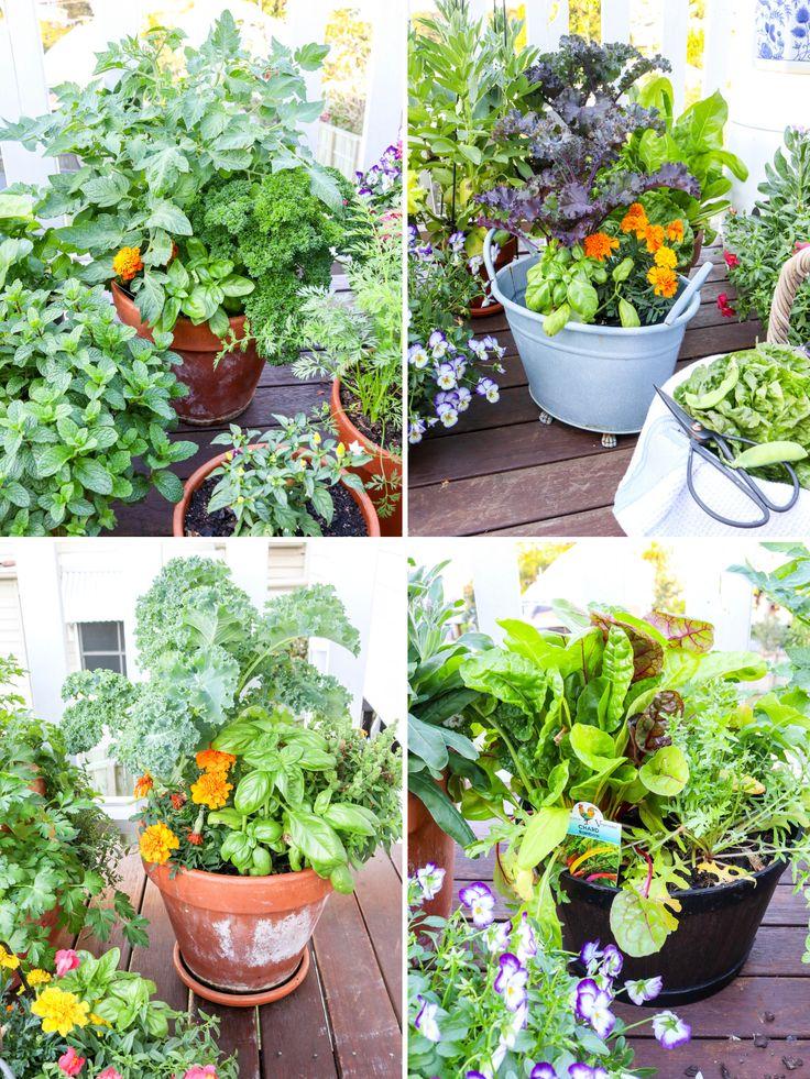 how to grow a kitchen garden in pots organic gardening tips organic vegetable garden kitchen on kitchen garden id=79915