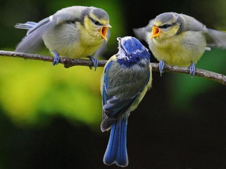 Картинки прикольные птички