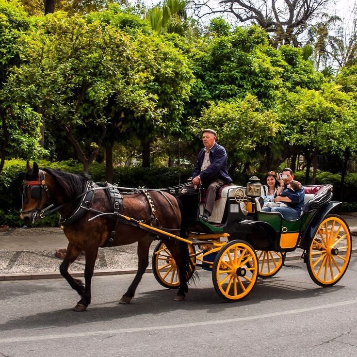 Malaga Spain - A carriage ride offers a romantic overview of the city while you relax. Ops I think I was filmed while photographing the couple.  Malaga Espanha -Um passeio de carruagem oferece uma romântica visão geral da cidade enquanto você relaxa. Ops acho que fui filmado enquanto fotografava o casal. #spain #malaga#lifestyle#travelling #espanha #europe #europa #streetphotography#goodtime#photographyeveryday#photography #photographer#street #streetphotographer #photographylovers…