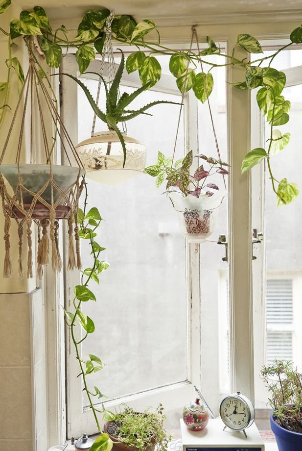 Green room love green pinterest green rooms room - How to hang plants in front of windows ...