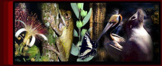 ¿Qué es biodiversidad?