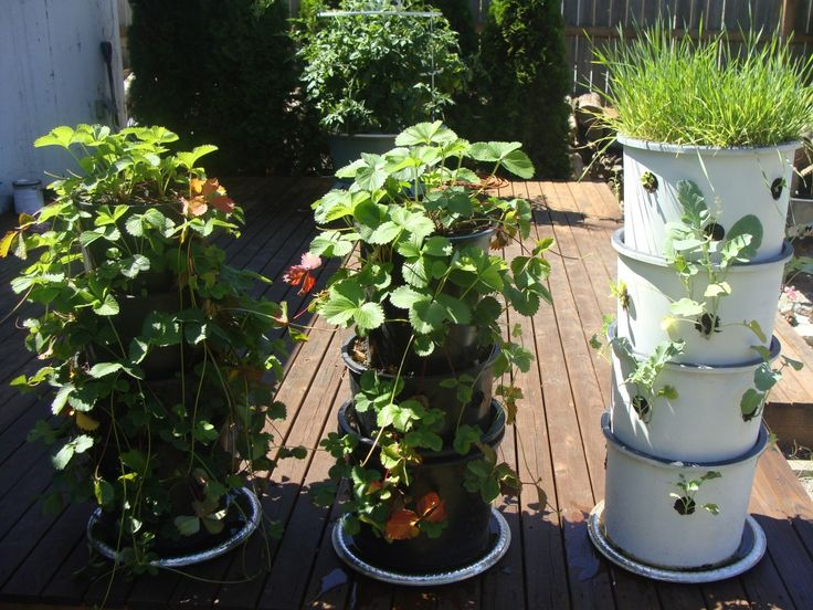Best Vegetables Grown In Pots Images On Pinterest Gardening