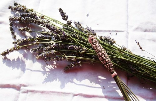 Fusi di lavanda intrecciati a mano Spindles lavender hand-woven. excellent as profumabiancheria, bombonieri, small thoughts for your guests.  Fragrant. to buy:http://blomming.com/mm/Aromantiche/items/fusi-di-lavanda-intrecciati-a-mano?page=5_type=thumbnail