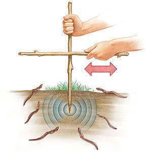 Find an area of loose, slightly moist soil (the dirt under a log or landscape timber works well) and push a 12- to 18-inch-long stick two to three inches into the ground. Vigorously rub another stick from side to side against it for about 2 minutes and watch as any worms in the vicinity wriggle to the surface...