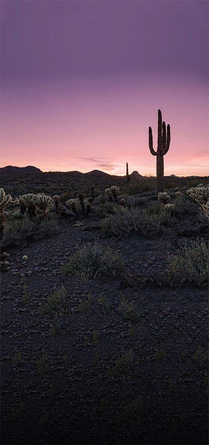 4634 Desert Sunset Cactus Landscape Printed Photography Backdrop