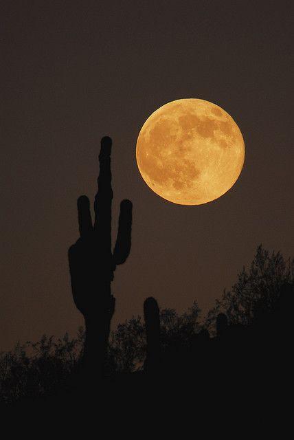 Arizona full yellow moon: Harvest Moon, Phoenix Az, Sonoran Desert, Phoenix Arizona, Moon Rise, Beautiful Moon, Rise Phoenix, Full Moon, The Moon