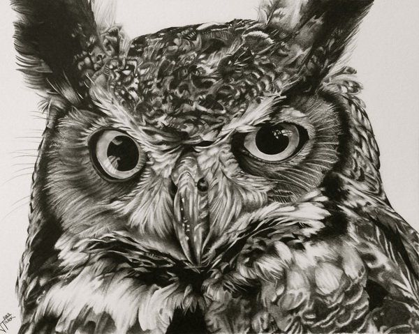 10+ Clever Owl Drawings for Inspiration | Owl, Drawings ...