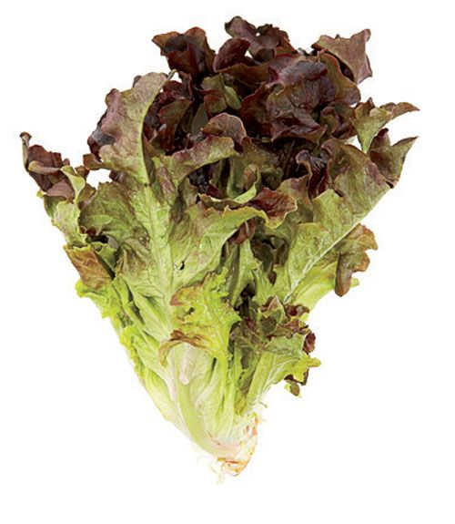 how to avoid listeria in lettuce
