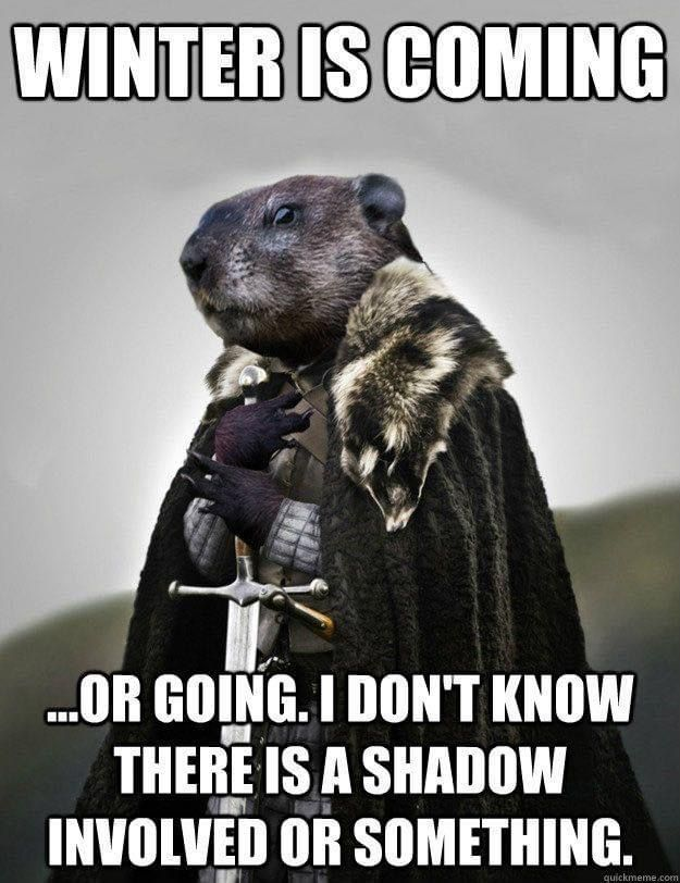 Pin By Sue Springfield On Giggles Grins In 2021 Happy Groundhog Day Winter Humor Funny Koala
