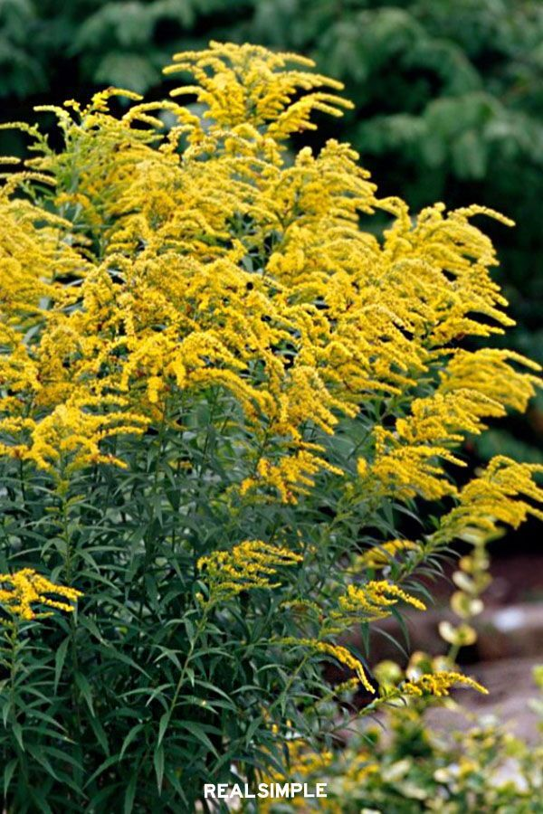 8 Fall Blooming Native Plants You Ll Love For Adding Late Season Color To Your Garden In 2020 Plants Native Plants Fall Garden Planting