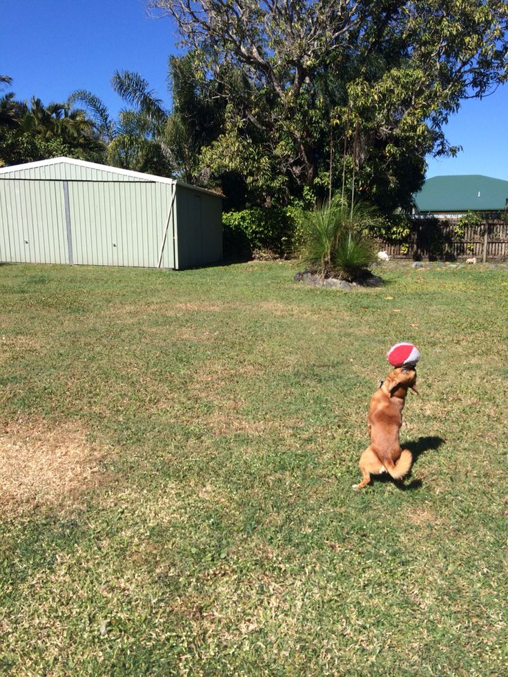 Buster - what a catch better then some fullbacks in NRL