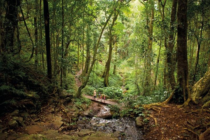 Bunya Mountains National Park #worldparksday #SouthBurnett