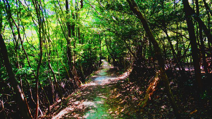 比叡山雲母坂ルートの森の小径 #京都 #比叡山 #登山