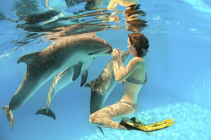 Swimming With Dolphins in Naples, Florida KathyLovesNaples.com