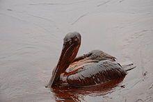 Deepwater Horizon oil spill - Wikipedia, the free encyclopedia