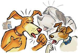 Köpeklerde Gençlik Hastalığı (DİSTEMPER)   İzmir Köpek Eğitim Okulu