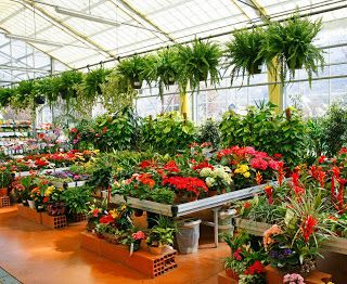 Home Plant Nursery Business Plans