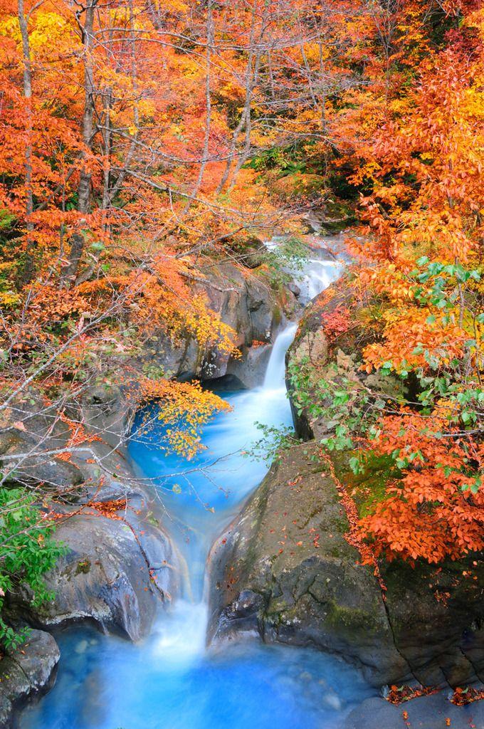 この水の蒼さ!けっして色を付けているわけではありません。本当に鮮やかな蒼なんです! 白山国立公園の飛騨側の登山口に白水湖があります。その直ぐ下流に名瀑「白水の滝」があるのですが、そこに流れ込む大白水谷からの清流です。近くに白水露天風呂もあり、火山性の硫黄泉ですが、白水湖も心持ち青...