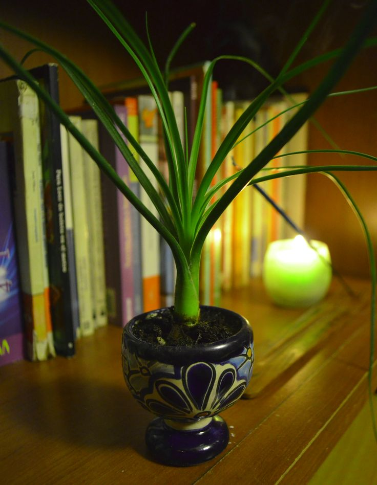 """""""The Little Cebollini""""  #Mexican #EtnoHipster #Room #Candle #Books #Bookseller"""