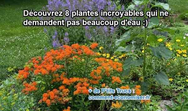 8 Plantes Que Vous N'aurez Presque Pas Besoin d'Arroser.