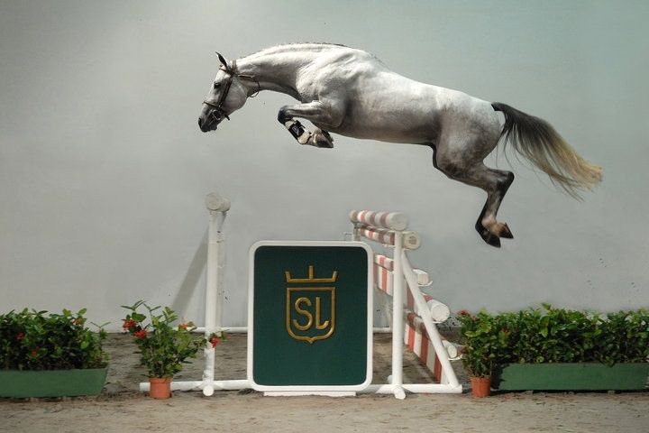 Do you ever get the feeling that we riders are just getting in the way? Yep, that's a real photo of a real horse jumping. Looks like he's flying!