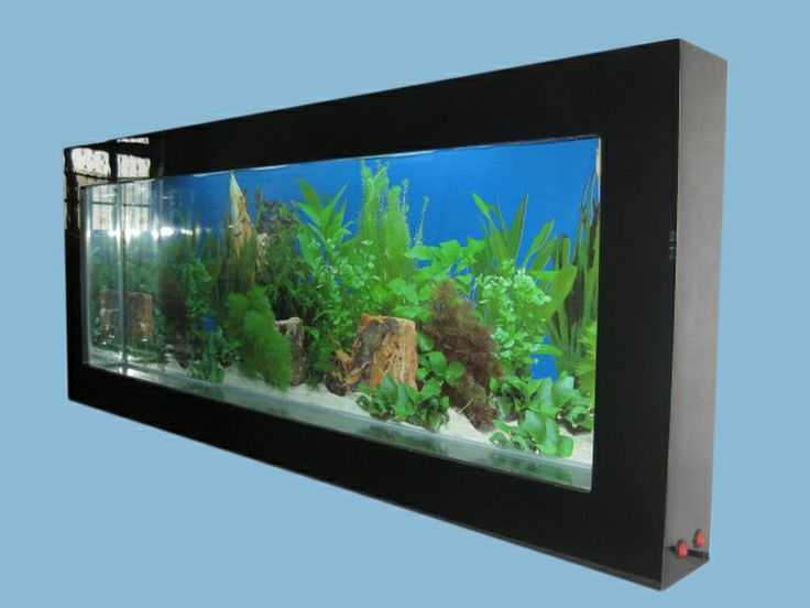 54 best aquariums and beta fish images on pinterest for Wall hanging fish tank