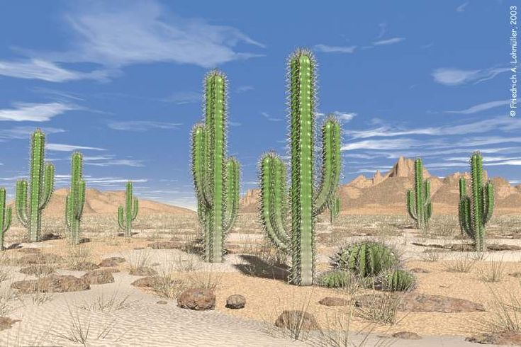 deserts cactus - photo #11