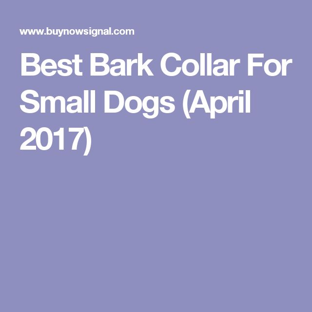 Best Bark Collar For Small Dogs (April 2017)