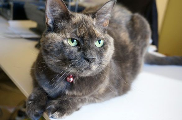 17 Best images about Adoptable Animals at aspca on ...