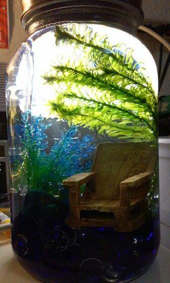 Best 25 1 gallon fish tank ideas on pinterest fish tank for Fish tank rock cleaner