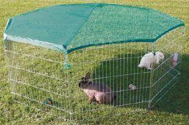 INFO on Rabbit Runs... http://www.therabbithouse.com/outdoor/rabbitrun.asp wire play pen
