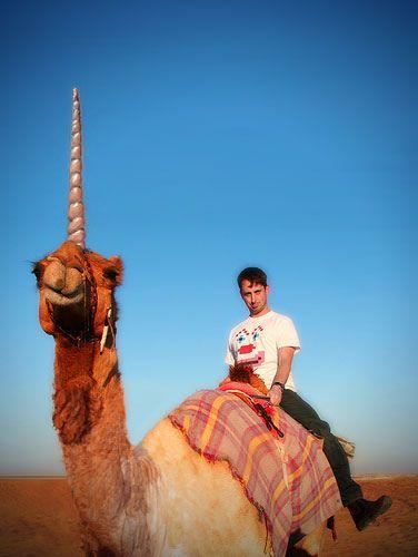 chip on a camel