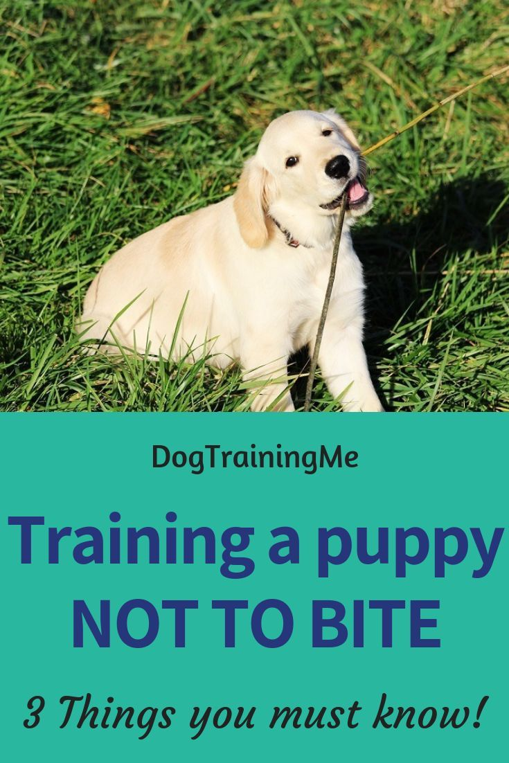 How To Get A Puppy To Stop Biting Puppy Biting Chewing Hunde