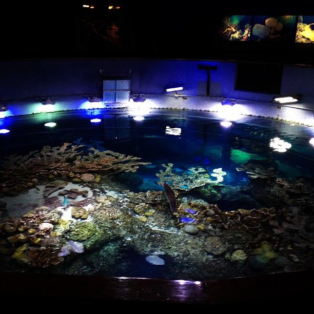 21 best big fish tanks images on