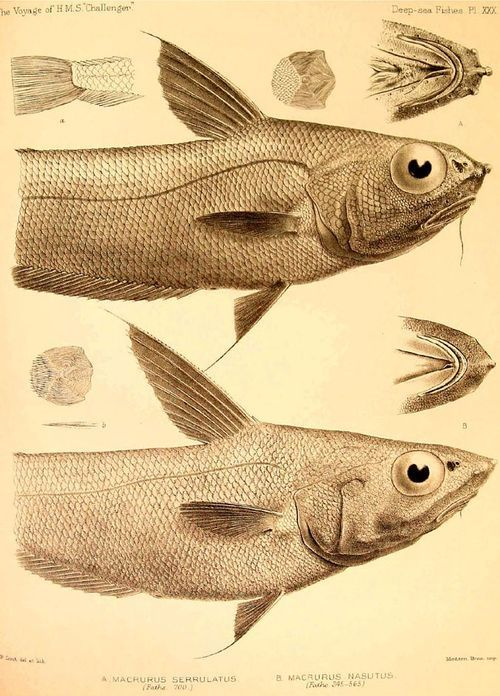 17 best images about ocean sea life on pinterest fish for Dr albert fish