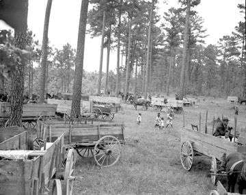 Wagons driven to the barbeque, Braswell Plantation near Rocky Mount, NC, September 1944. From Conservation and Development Department, Travel and Tourism Photo Files, North Carolina State Archives, Raleigh, NC