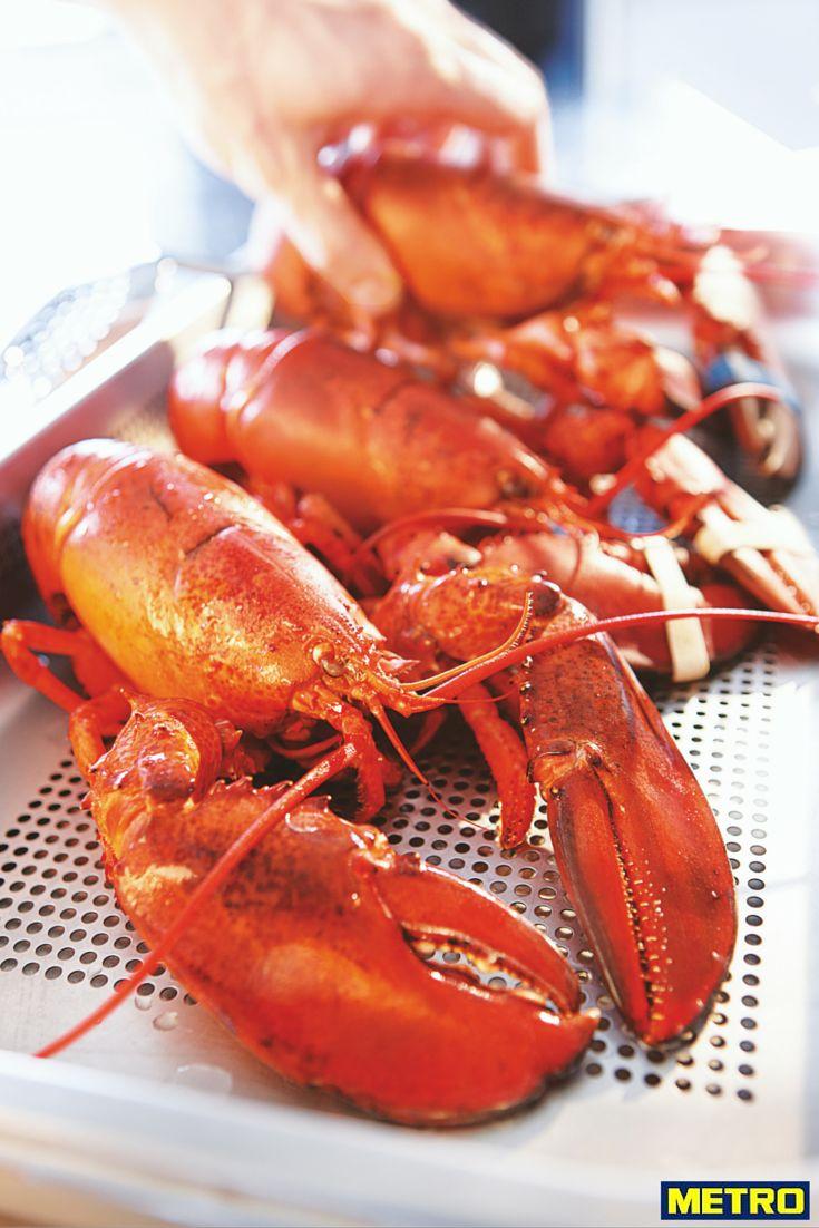 Le homard est disponible toute l'année (homard américain d'octobre à mai, homard bleu de mai à septembre).  Le homard vivant est pêché en Atlantique Nord-Ouest. Les homards d'Amérique du Nord sont sélectionnés par les équipes de METRO présentes en permanence à Boston (USA), en provenance des côtes de la Nouvelle-Angleterre ou du Canada.